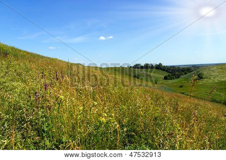 Grass Meadow Nature