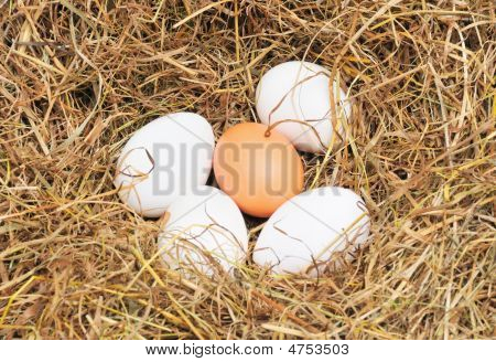 Five Fresh Eggs