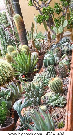Mix Of Many Succulents And Cactus With Sharp Prickles And Thorns Of The Cactus Desert Plants