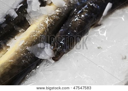 Fresh Eel Just Cached
