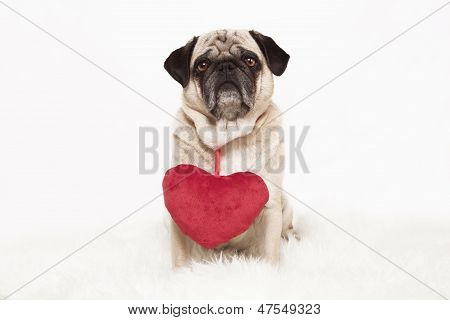 Pug With Red Heart