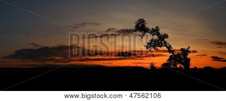 Silhouette Of Old Tree During African Sunset