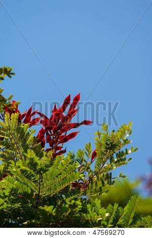 Vivid Flower Againstblue Sky