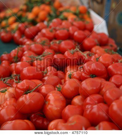 Bountiful Tomatoes