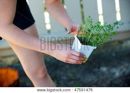 Woman Picks Up A Plant In A White Container