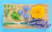 image of borage  - Summer herbs and edible flowers on wooden plate on blue background - JPG