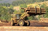 stock photo of logging truck  - A large wheeled loader unloads a log truck at a small log sawmill in Oregon - JPG