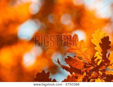 Hojas de otoño, muy poca profundidad de foco