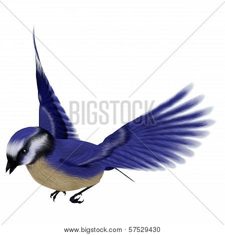 Florida Jay Bird