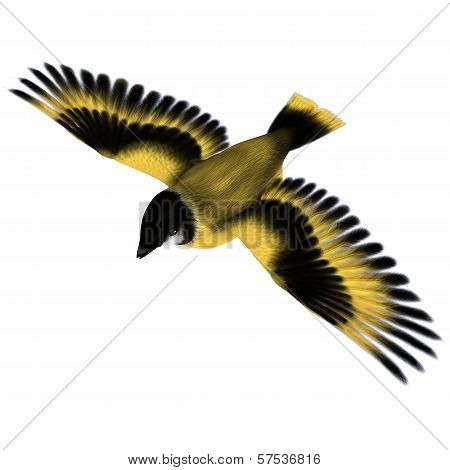 Flying Goldfinch Bird