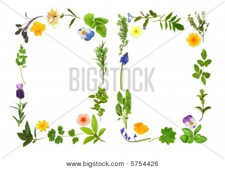 Herb And Flower Leaf Borders