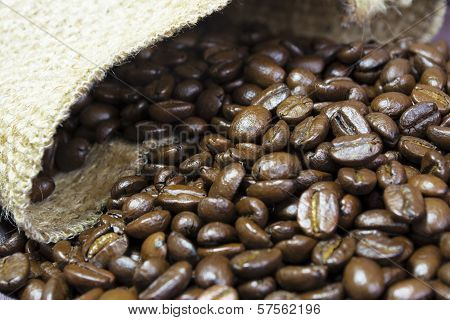 Coffee Beans Outside His Jute Bag