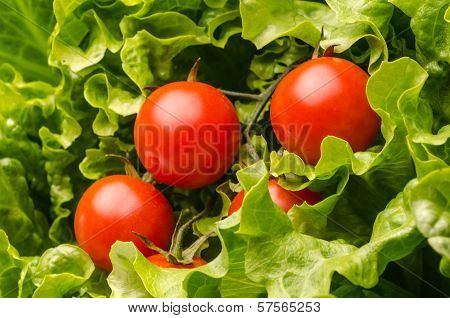 Fresh Salad And Tomatoes