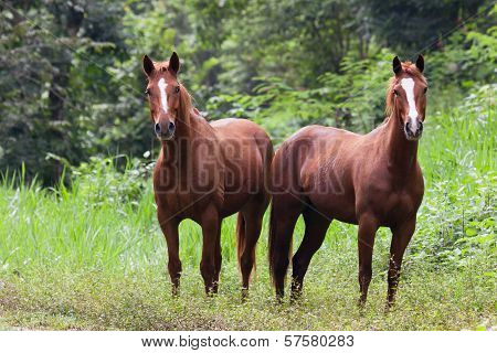 Horses In Belize