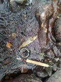 pic of fly rod  - A brown trout caught on a fly in the river by the rod - JPG
