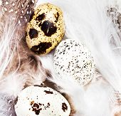 Beautiful Quail Eggs On  White Feathers Background, Macro. Hq Photo Of Quail Eggs With Copy Space Fo