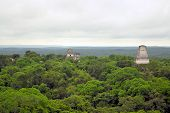 Mayan Temples Above The Forest In Tikal, Guatemala
