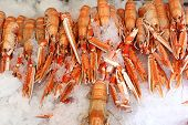 stock photo of norway lobster  - Spiny Lobster on Fish Market in Bergen Norway - JPG