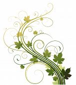image of grape-vine  - it is Vector illustration of style Floral Background - JPG