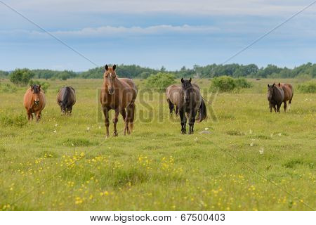 Horses on a hayfield