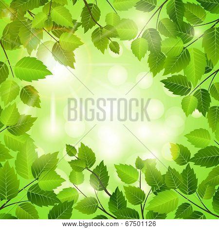 Spring frame of green leaves