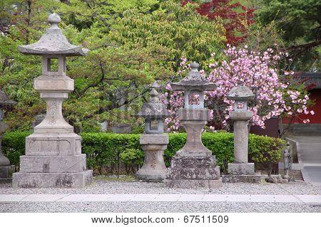 Cherry Blossom In Nagano