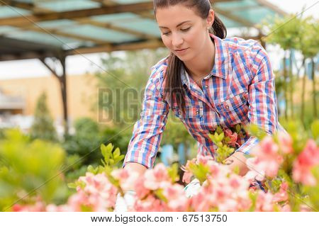 Garden center woman working in pink flowerbed looking down plants