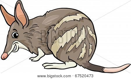 Bandicoot Animal Cartoon Illustration