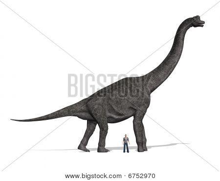 Brachiosaurus Size Compared To Man