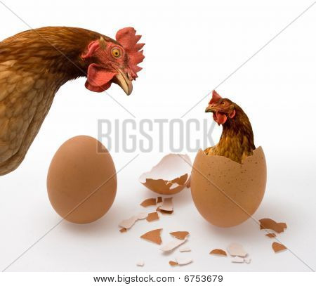 Chicken or Egg, Philosophy Question, Who was the first. Philosophical dilemma