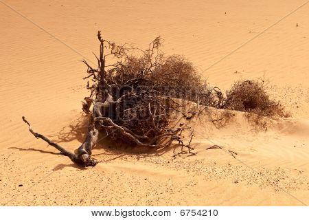 L_desert