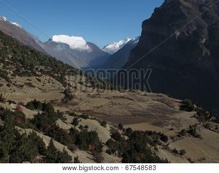 Fields In High Altitude