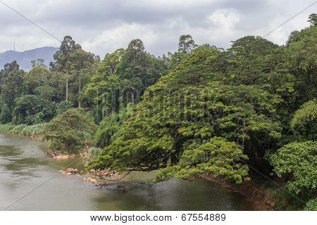 River In The Botanical Garden Of Peradeniya