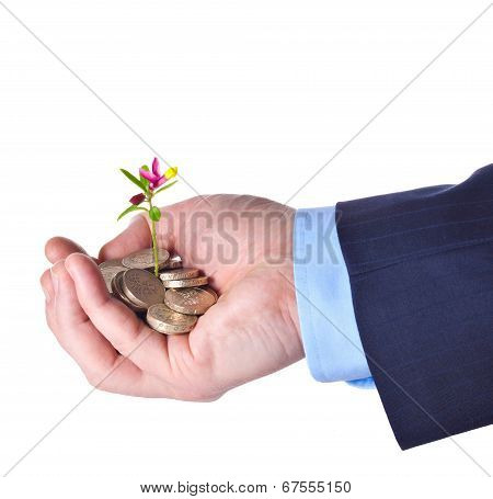 Young Sprout With Flower Grows From A Heap Of British Pound Sterling Coins In The Hand Of Some Busin