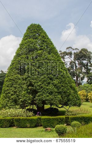 Botanical Garden Of Peradeniya