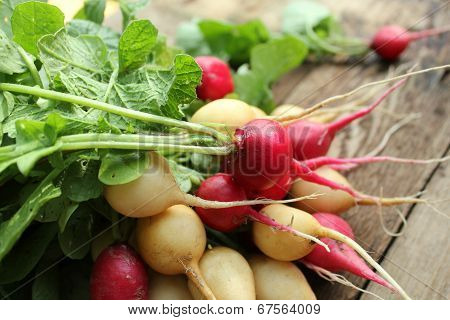 Fresh radishes on wooden background