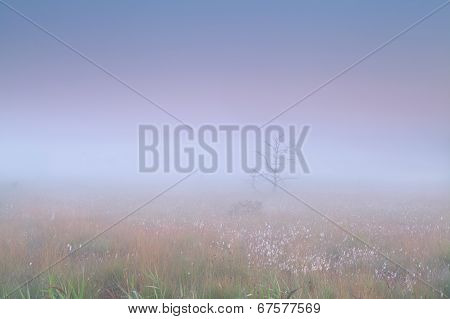 Marsh In Dense Fog