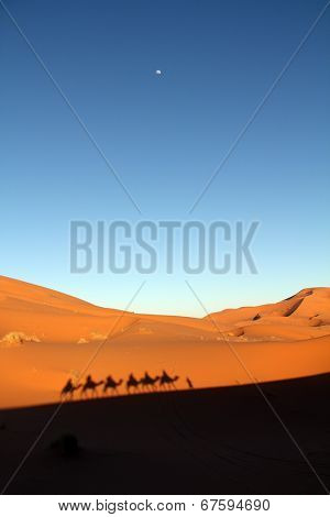 Shadows of a camel caravan on the desert sand in late afternoon with rising moon taken in Erg Chebbi in Morocco