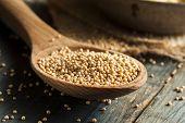 image of mustard seeds  - Raw Organic Mustard Seeds in a Spoon - JPG