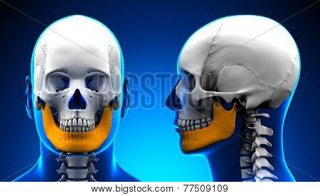 Male Mandible Bone Skull Anatomy - Blue Concept