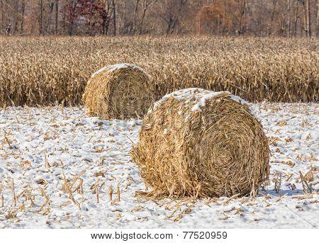 Snowy Cornstalk Bales
