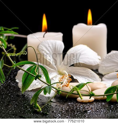 Beautiful Spa Still Life Of White Hibiscus, Twig With Tendril Passionflower And Candles On Zen Basal