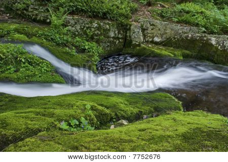 Moss Carpet and Stream