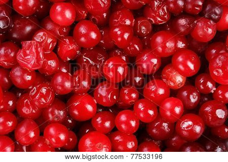 Lot of red fresh cranberries