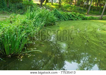 Vegetation At The Bank Of The Green Water Pond
