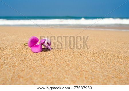 pink Leelawadee flower on the sand