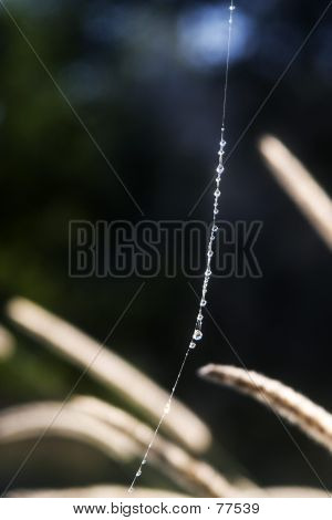 Cobweb Suspension