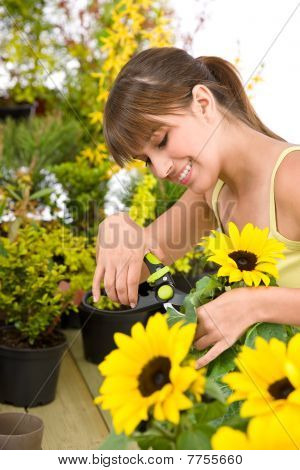 Gardening - Woman Cutting Sunflower