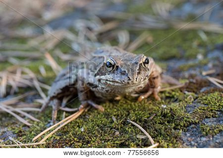Toad Closeup
