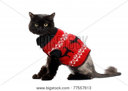 black cat wearing in a red Christmas cardigan
